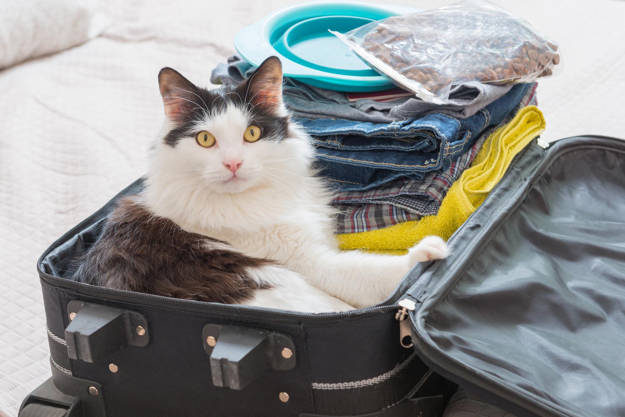 トランクケースに入る猫