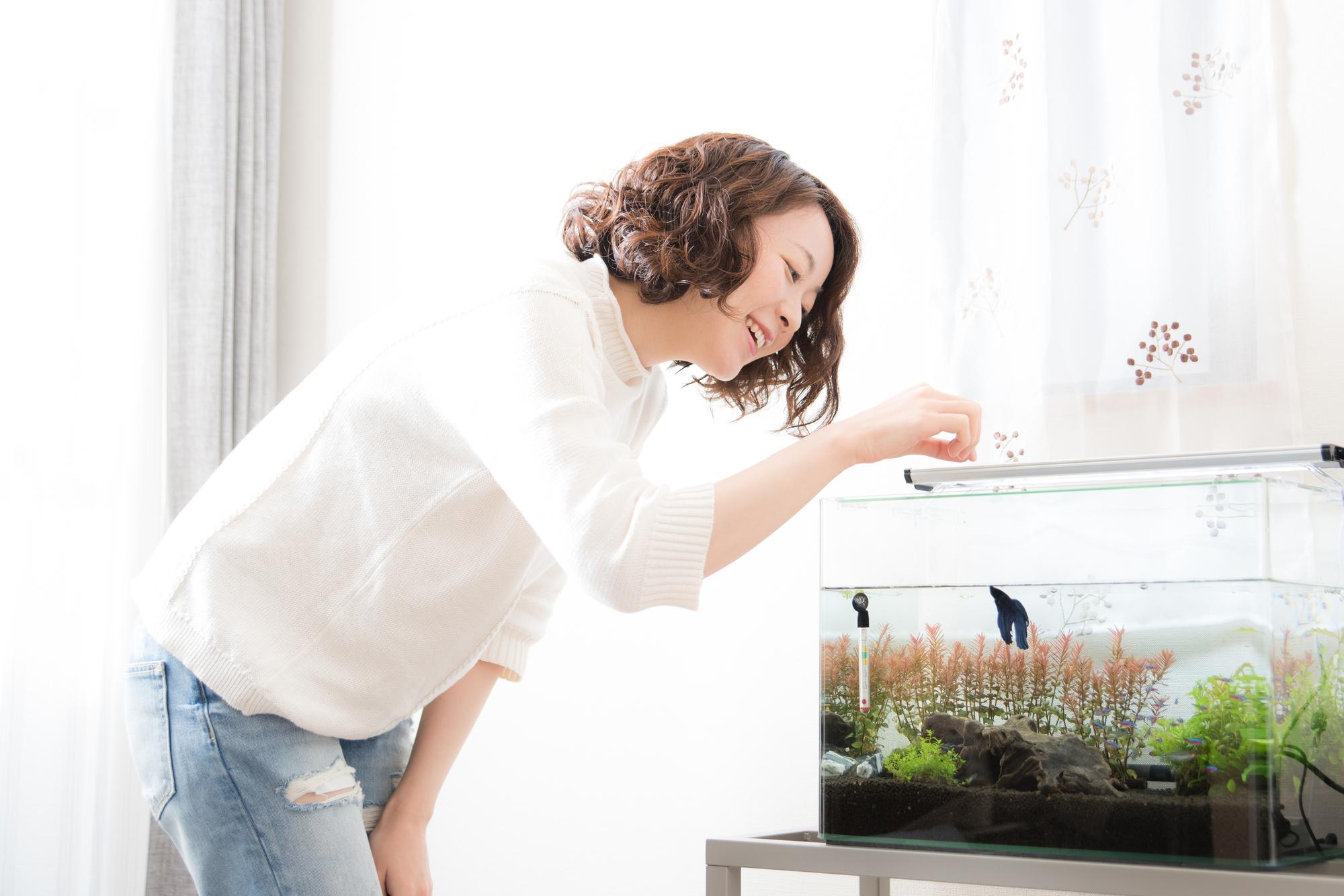 熱帯魚に餌をやる女性