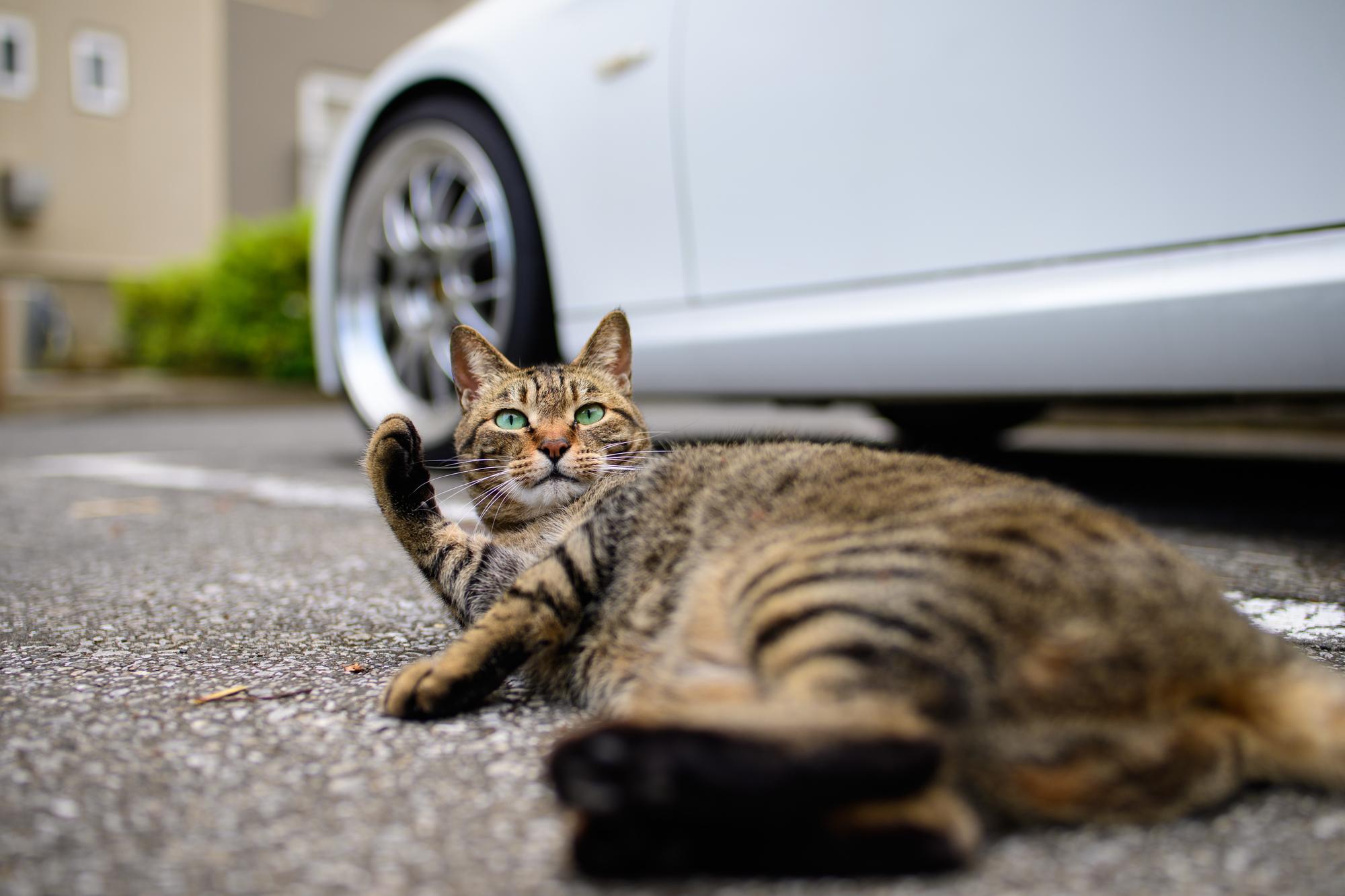 猫の長距離移動
