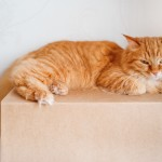 【獣医師に聞いた】猫との引越し ストレスを軽減する準備&新居での過ごし方